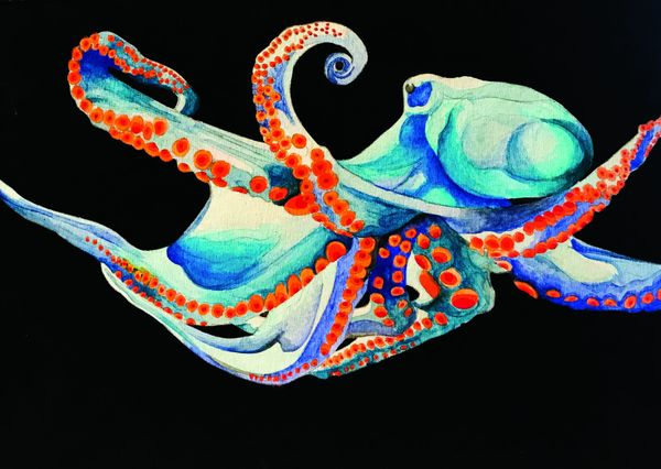 Dive Into the Mind of an Octopus